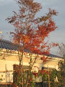 寿光庵の紅葉も色付きました